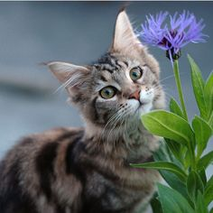 A Kitten A Day...