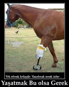 "go-vegan-or-go-fuck-yourself: "" This is what horse racing causes. This horse broke his leg during a race. As he was not going to compete anymore his owner decided to send him to slaughter. Fortunately an animal sanctuary rescued him, giving him the. Pretty Horses, Horse Love, Beautiful Horses, Animals Beautiful, Beautiful Life, Animals And Pets, Cute Animals, All Gods Creatures, Horse Pictures"