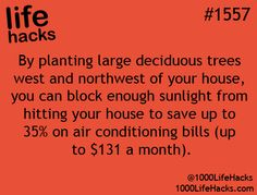 by planting large trees west and northwest of your house,  you can block enough sunlight from hitting your house to save up to 35 % on Air conditioning bills.  up to $131 a month!