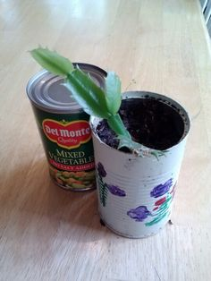 Recycled cans for indoor plants