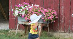 Young church party guest walks past washtubs of petunias on the west end of the Courtyard Pole Barn at Westwoods' Civil War Ranch. (Pictures by Lena & Leif Baron)