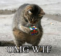 OMG WTF: Can't pass up a good lolcat...