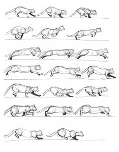 A quick study of the cat in motion. No more than a minute or two spent on each drawing. Sakura Gelly Roll pen on animation paper. Reference used: Horses and other Animals in Motion by Eadweard Muyb...
