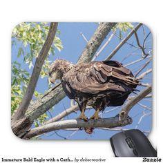 Immature Bald Eagle with a Catfish Mouse Pad