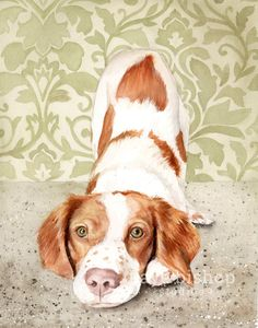 Brittany Spaniel Watercolor Painting Brittany by KayeBishopStudios Brittany Spaniel Dogs, Schnauzer Art, Cute Little Animals, Watercolor Paintings, Painting Art, Watercolors, Animal Paintings, Dog Art, American Brittany