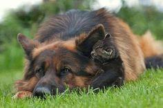 GSD & kitty