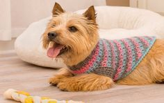 Make this sporty style crochet dog sweater to keep your furry little friend warm while walking in cold weather. The combination of brown, pink and blue...