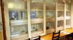Another rabbit cafe, bunnies in cages