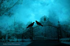 Surreal fantasy raven gate print in shades of aqua turquoise Title: Surreal Haunting Gothic Gate With Ravens Crows Sizes: {Choose size from menu} Canvas prints available on custom order request. See MORE of my Surreal and Gothic Art Prints here below: Raven Photography, Gothic Photography, Gothic Fantasy Art, Dark Fantasy, Cemetery Statues, Woodland Art, Halloween Prints, Nature Prints, Surrealism