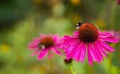 by Aziz Nasuti on Sweet, Plants, Candy, Plant, Planets