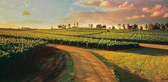 Las ventas de vino australiano superarán los 10.000 millones de dólares, en 2020