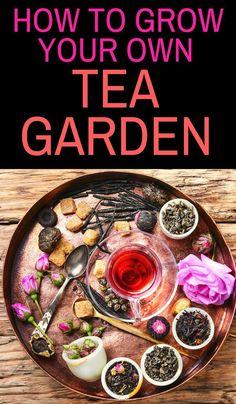 How to Grow Your Own Tea Garden - Gartenpflanzen Organic Gardening, Gardening Tips, Gardening Books, Gardening Gloves, Urban Gardening, Hydroponic Gardening, Homemade Tea, Homemade Recipe, Tea Blends