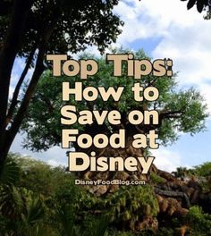 How to Save on Food at Disney World