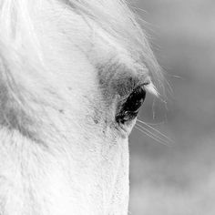 Black and white horse photography