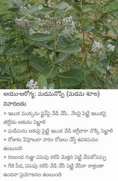 Saved by radha reddy garisa Ayurvedic Home Remedies, Health Remedies, Natural Remedies, Health Facts, Health Diet, Health Care, Health Fitness, Good Health Tips