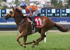 G1 Rosehill Guineas winner Gingernuts (NZ) (Iffraaj {GB}) will be aimed towards a second trip across the Tasman Sea with the G1 Caulfield Cup as his Spring Carnival aim.  The New Zealand-trained gelding, who landed the …