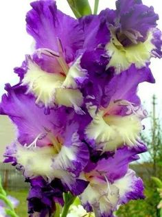!!!La belleza en flor !!! - Community - Google+