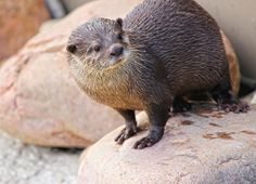 Our little otter sisters can't wait to meet you all on March 1st!!