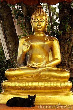 Bouddha et chat noir
