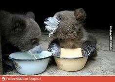 Ever seen a baby bear cub having some milk?