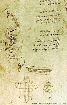 Sex-uality — Discovering da Vinci: Interesting Drawings, Couple Sketch, Figure Drawing, Science And Technology, Masters, Journal, Design, Art, Master's Degree