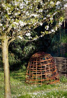 Willow cloche protecting salad. Panasonic Lumix GF1 + micro 4: 3 - HFS 100/300 mm - 29/03/2015 #guidofrilli Garden Cloche, Outdoor Furniture, Outdoor Decor, Salad, Gardening, Italy, Chicken, Kitchen, Pretty Pictures