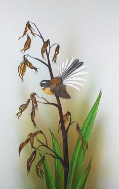 Fantail on spent flax by Janet Marshall gouache. Peacock Wall Art, Flax Flowers, Zealand Tattoo, Polynesian Art, Maori Designs, New Zealand Art, Nz Art, Maori Art, Metal Artwork