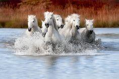 Run in the Marsh