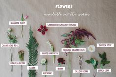 Ms-Mandy-M : Flower Season Guide