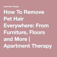 1000 Ideas About Remove Pet Hair On Pinterest Cat Urine Dog Urine And Window Squeegee