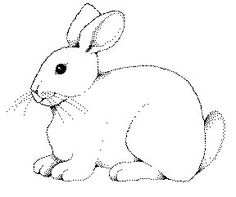 4570 Bunny In Flowers Coloring Page 543x700