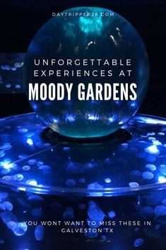 Moody Gardens in Galveston TX is more than a hotel. They have an aquarium rainforest beach and so much more. The one that threw me for a loop had to be the Ice Land. Road Trip Essentials, Road Trip Hacks, Camping Hacks, Road Trips, Kids Things To Do, Stuff To Do, Fun Things, Cruise Vacation, Disney Vacations