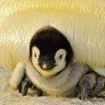 Ismét indul a pet palackos paradicsom szezon! | Nagybetűs Élet Penguins, Van, Animals, Animales, Animaux, Penguin, Animal, Animais, Vans