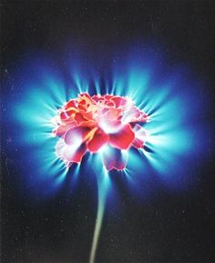 Kirlian Photography The blaze of the force — DOP