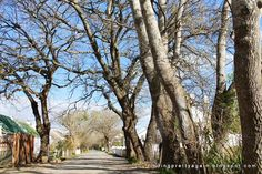 Finding Pretty Again: Greyton on a sunny winter's day Winter Day, South Africa, Sunnies, Nice, Fall, Pretty, Plants, Travel, Autumn