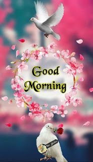 millardlepicier - 0 results for good morning quotes Good Morning Rose Gif, Good Morning Friends Images, Good Morning Beautiful Pictures, Good Night Beautiful, Good Morning Thursday, Happy Morning Quotes, Good Morning Prayer, Good Morning Picture, Good Morning Flowers