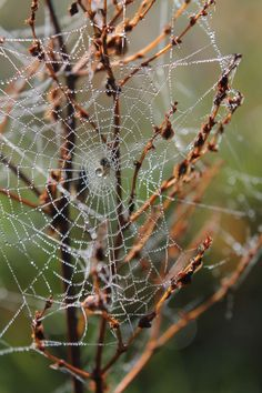 Spider | Web | Dew | Autumn | Cold | Nature