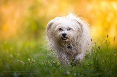 https://flic.kr/p/wauTUY | Colourful | Das beste am Mensch ist sein Hund.                   Patrice Jeancourt