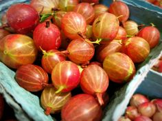 Gooseberries http://s.coop/gooseberries