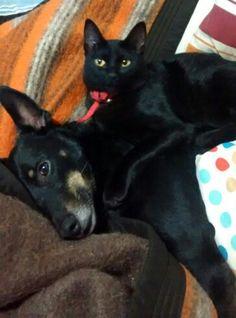 Mora sobre Lola, mis dos consentidas Cute Black Cats, Dogs, Animals, Gatos, Animales, Animaux, Pet Dogs, Doggies, Animal