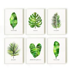 Palm leaf watercolor painting, Set of 3 botanical painting, Green leaf artwork  This set of 3 palm leaf watercolor art will make an elegant collection for your living room or bedroom. They were painted by me, Tinarosa Tam. They are a reproduction of my original watercolor paintings.  This listing includes: 1. Areca palm 2. Monstera 3. Banana leaf  SMALL & MEDIUM SIZE PRINT • 4x6 / 5x7 / 8x10 / 11x14 / 12x18 / 13x19 • Printed on heavy weight, acid free fine art card with texture. It adds a…