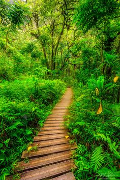 Into the Green by AndrewShoemaker on DeviantArt