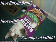 Two Scoops of Kitteh