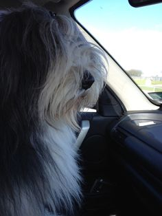 Out for a drive