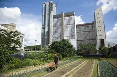 Urban Farming in Caracas | A group of activists has been working with school children on garden plots for fresh produce to help reduce the burden of an extremely high cost of living.