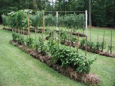 Affordable Straw Bale Garden: Arrange and water the bales daily for 3-4 weeks before planting. Then plant seeds/seedlings with a little seed-starting mix. Use soaker hoses to water. Bales break down and can be removed or left to break down over the winter and then tilled into the ground.