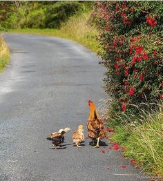 A family stroll on a Sunday morning. @fiac_mangan met them in Donegal.