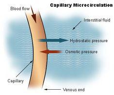 hydrostatic pressure   Interstitial Fluid