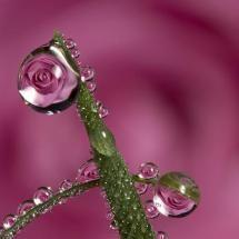 Dew Drops...beautiful!