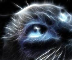 3D Fractal Art Cats   viewing cats animals fractalius hd wallpaper color palette tags cats ...
